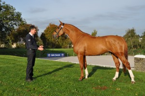 AWAY SEMILLY presented by his breeder
