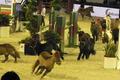 Les poneys rouges de Cantelout