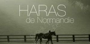haras-de-normandie